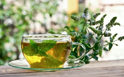 Can green tea cure obesity induced arthritis?