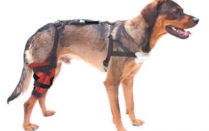 A Dynamic Brace For Dogs