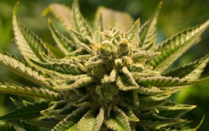 Limonene-a Cannabis product; Cannabis Benefits